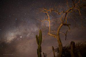 Natureza Sertaneja - Foto: Diego Alencar